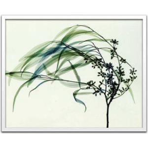 レントゲンアート 絵画/風/絵画 壁掛け 壁飾り インテリア 油絵 花 アートパネル ポスター 絵 額入り リビング 玄関|ayuwara