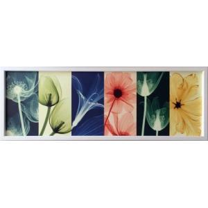レントゲンアート 絵画 フローラ/絵画 壁掛け 壁飾り インテリア 油絵 花 アートパネル ポスター 絵 額入り リビング 玄関|ayuwara