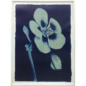 アートフレーム Thomas Hager Open Geranium #2,2002/絵画 壁掛け 壁飾り インテリア 油絵 花 アートパネル ポスター 絵 額入り リビング 玄関|ayuwara