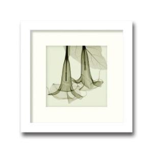 レントゲンアート 絵画/ダチュラ スモール/絵画 壁掛け 壁飾り インテリア 油絵 花 アートパネル ポスター 絵 額入り リビング 玄関|ayuwara