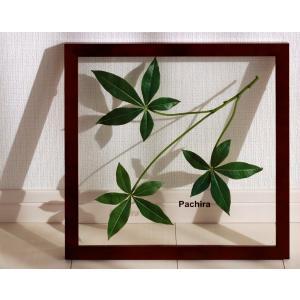 リーフパネル 絵画/パキラ/絵画 壁掛け 壁飾り インテリア 油絵 花 アートパネル ポスター 絵 額入り リビング 玄関|ayuwara