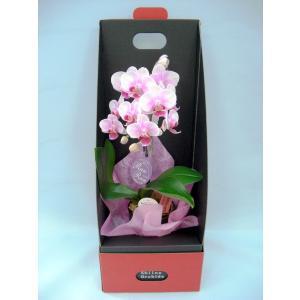 ミディ胡蝶蘭 ピンク色胡蝶蘭 1本立ち 2ウエイテーブルボックス付き(こちょうらん)/誕生祝い 花 産地直送 フラワーギフト 洋ラン 胡蝶蘭 お祝い 鉢植え|ayuwara
