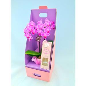 ミディ胡蝶蘭 ピンク色胡蝶蘭 2本立ち フローラアロマ 2ウエイテーブルボックス付き(こちょうらん)/花 産地直送 フラワーギフト 洋ラン お祝い 鉢植え|ayuwara