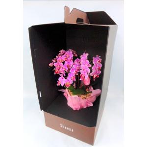 ミディ胡蝶蘭 ピンク色胡蝶蘭 3本立ち ドレスボックス付き(こちょうらん)/誕生祝い 花 産地直送 フラワーギフト 洋ラン 胡蝶蘭 開店祝い 開業祝い お祝い|ayuwara