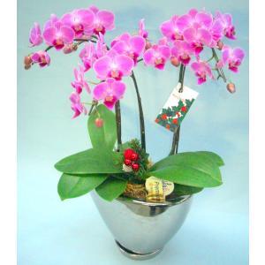 ミディ胡蝶蘭 ピンク色胡蝶蘭 3本立ち シルバー鉢(クリスマス仕様)(こちょうらん)/花 産地直送 フラワーギフト 洋ラン 胡蝶蘭 お祝い 鉢植え|ayuwara