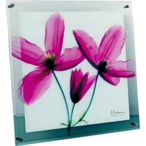 レントゲンアート X RAY ガラス アート「ジャーニー クレマチス(Mサイズ)」/絵画 壁掛け 壁飾り インテリア|ayuwara