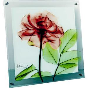 レントゲンアート X RAY ガラス アート「ローズ(Lサイズ)」/絵画 壁掛け 壁飾り インテリア|ayuwara