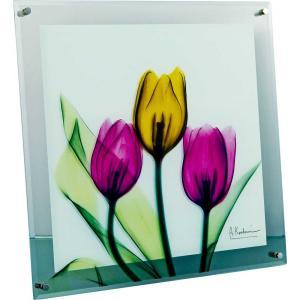 レントゲンアート X RAY ガラス アート「チューリップ(Lサイズ)」/絵画 壁掛け 壁飾り インテリア|ayuwara