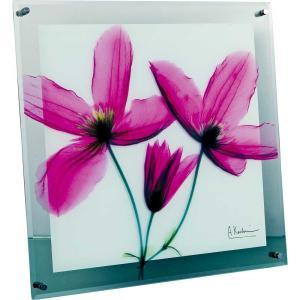 レントゲンアート X RAY ガラス アート「ジャーニー クレマチス(Lサイズ)」/絵画 壁掛け 壁飾り インテリア|ayuwara