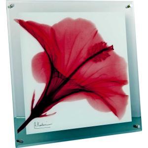 レントゲンアート X RAY ガラス アート「レッド ハイビスカス(Lサイズ)」/絵画 壁掛け 壁飾り インテリア|ayuwara