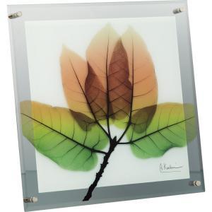 【レントゲンアート】X RAY ガラス アート「アスペン フォール(Lサイズ)」|ayuwara
