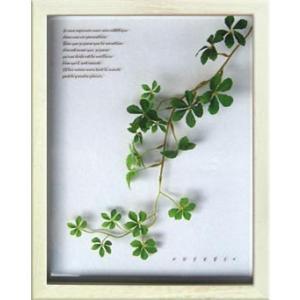 プラント アートフレーム Suger vine(シュガーバイン)/絵画 壁掛け 壁飾り インテリア|ayuwara