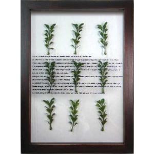 ハーブフレーム/musee de herbe Herbe VI(ミュゼ ド エルブ ハーブ6)/絵画 壁掛け 壁飾り インテリア 油絵 花 アートパネル ポスター 絵 額入り リビング 玄関 ayuwara