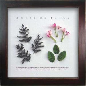 ハーブフレーム/ゆうパケット Musee de herbe Herbe 1(ミュゼ ド エルブ ハーブ)|ayuwara