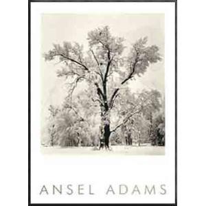Oak Tree(エンボスマーク入)(アンセル アダムス) 額装品 アルミ製ハイグレードフレーム|aziz