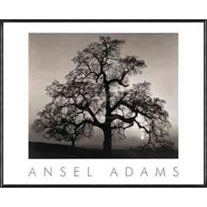 Oak Tree - Sunset City California (エンボスマーク入)(アンセル アダムス) 額装品 アルミ製ハイグレードフレーム|aziz