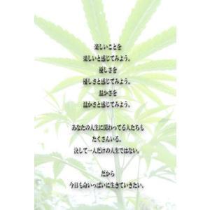 タマラ・加藤憲子 タマラブログ「魂に問う答え」より「守りたい命」ポストカード|b-shopping