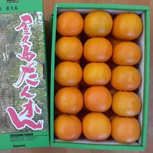 屋久島直送 屋久島たんかん 5kg×1箱 LLサイズ 贈答用|babayaku