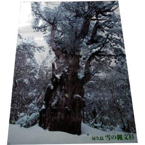 ポスター 雪の縄文杉|babayaku