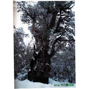 ポスター 雪の縄文杉 中サイズ|babayaku