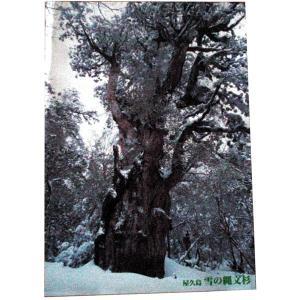 ポスター 雪の縄文杉 小サイズ|babayaku