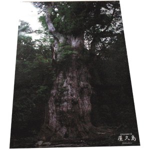 ポスター 縄文杉|babayaku