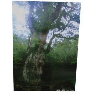 ポスター 縄文杉の森|babayaku