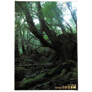 ポスター 白谷雲水峡 中サイズ|babayaku