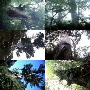 屋久島画像集2 babayaku