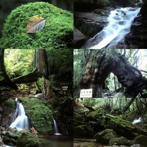 屋久島画像集9 白谷雲水峡 babayaku