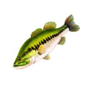 Giant Fish Pillow/ジャイアントフィッシュピロー 抱き枕|backlash