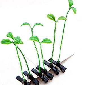 S&C LIve ヘアピン 話題ヘアピン 萌えもやし 萌え草 12個セット売り 頭に草がひょんと生える パッチンクリ|banana-store2