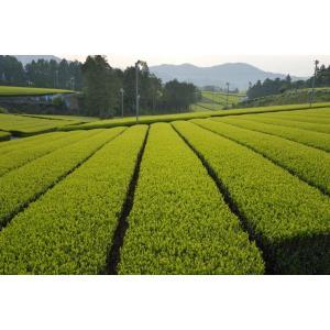 生姜紅茶 (しょうが紅茶) 120 ティーバッグ(2.5g×60TB)×2袋 日本産 無添加 無糖 無香料 bandokochaen 02