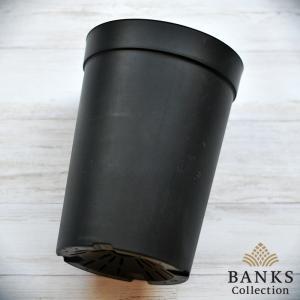 BC プラスチック製ロングポット(大)6個セット バンクスコレクション|bankscollection|03