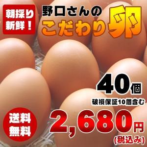 【送料無料】朝採り新鮮野口さんのこだわり卵40個(破損保証10個含む)【千葉県香取市より直送】