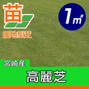 /代引不可/送料込み/高麗芝(張り芝用) 宮崎産 1平米(0.3坪分) 園芸|baroness