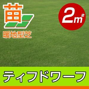 /代引不可/送料込み/ティフドワーフ(張り芝用) 宮崎産 2平米(0.6坪分) 園芸|baroness