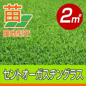 /代引不可/送料込み/セントオーガスチングラス(張り芝用) 宮崎産 2平米(0.6坪分) 園芸|baroness
