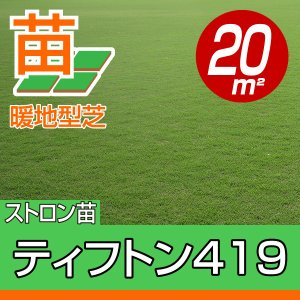 /2018年4月以降販売再開予定/送料込み・代引不可/ティフトン419(蒔き芝用)  約20平米(6坪)分 園芸 baroness