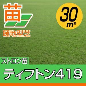 /2018年4月以降販売再開予定/送料込み/代引不可/ティフトン419(蒔き芝用)  約30平米(9坪)分 園芸 baroness