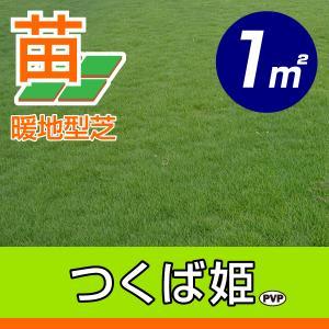 /代引不可/つくば姫(姫高麗芝)(張り芝用) つくば産 1平米(0.3坪分) 園芸|baroness