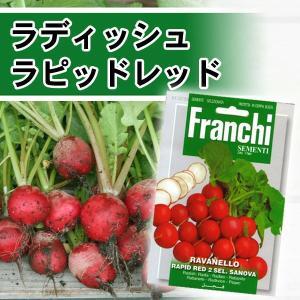 /メール便/西洋野菜の種  ラディッシュ ラピッドレッド イタリア FRANCHI社|baroness