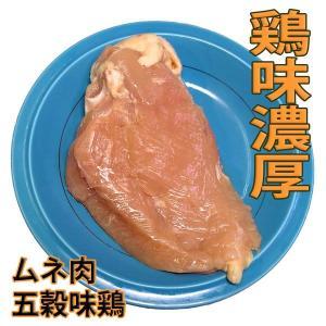 鶏肉 塊肉 鶏むね肉 五穀味鶏 1枚 冷凍 真空パック(ブロック かたまり)肉|bbq