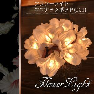 フラワーライト ココナッツポッド(001)(W_N)|beauty-land