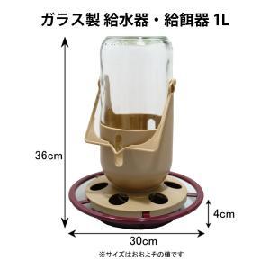 【野鳥用バードフィーダー】ガラス製給餌器・給水器【餌入れ】 belbird