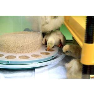 【餌入れ】野鳥用給餌器・ひよこ用給餌器【バードフィーダー】|belbird