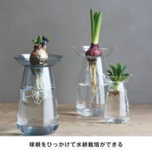 水耕栽培が愉しめる花器 AQUA CULTURE VASE L