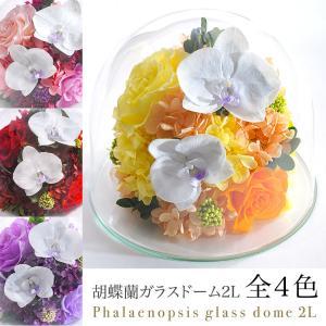 クリスマス 花 プレゼント 2020 プリザーブドフラワー 送料無料  #胡蝶蘭のガラスドーム〈2L〉(リニューアル)|belles-fleurs