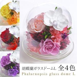 クリスマス 花 プレゼント 2020 プリザーブドフラワー   送料無料 プリザーブドフラワー #胡蝶蘭のガラスドーム〈L〉(リニューアル)|belles-fleurs