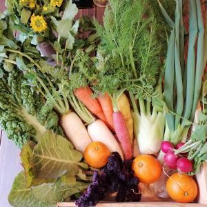 九州産 有機野菜「農園てとて」さんの季節の有機野菜おまかせセット [冷蔵便]